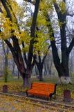Kleurrijke de herfstbomen met vergeeld gebladerte in het de herfstpark Royalty-vrije Stock Foto's