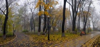 Kleurrijke de herfstbomen met vergeeld gebladerte in het de herfstpark Stock Foto's