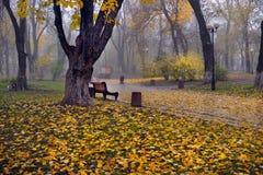 Kleurrijke de herfstbomen met vergeeld gebladerte in het de herfstpark Royalty-vrije Stock Afbeelding