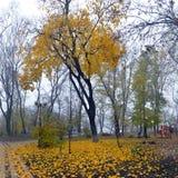Kleurrijke de herfstbomen met vergeeld gebladerte in het de herfstpark Stock Afbeelding