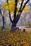 Kleurrijke de herfstbomen met vergeeld gebladerte in het de herfstpark Royalty-vrije Stock Fotografie