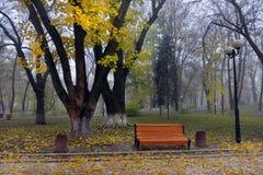 Kleurrijke de herfstbomen met vergeeld gebladerte in het de herfstpark Stock Foto