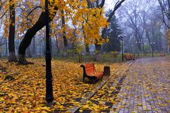 Kleurrijke de herfstbomen met vergeeld gebladerte in het de herfstpark Royalty-vrije Stock Afbeeldingen