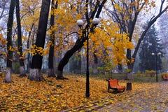Kleurrijke de herfstbomen met vergeeld gebladerte in het de herfstpark Stock Fotografie