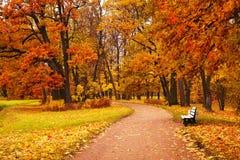 Kleurrijke de herfstbomen in park Stock Fotografie