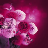 Kleurrijke de herfstchrysanten royalty-vrije stock afbeeldingen