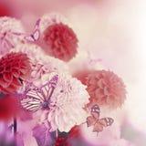 Kleurrijke de herfstchrysanten royalty-vrije stock fotografie