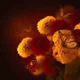 Kleurrijke de herfstchrysanten stock afbeelding