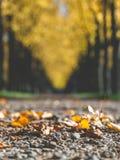 Kleurrijke de herfstdag van de parkpromenade stock foto's