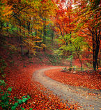 Kleurrijke de herfstscène in het bergbos Royalty-vrije Stock Foto