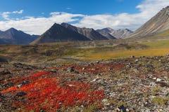 Kleurrijke de herfsttoendra en rivier Chukotka, Rusland Stock Afbeelding