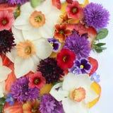 Kleurrijke de lente bloemen flatlay Stock Foto's