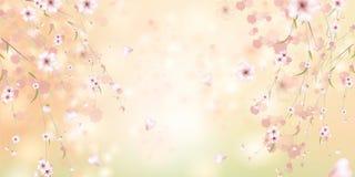 Kleurrijke de lente bloemenachtergrond met sakurabloemen royalty-vrije illustratie