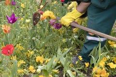 Kleurrijke de lentetuin met verschillende bloemen en maintenace arbeider in actie, detail stock afbeelding