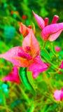 Kleurrijke in de schaduw gesteld en het onduidelijke beeld met verlichtingseffect computer produceerden bloemenachtergrondafbeeld stock foto's