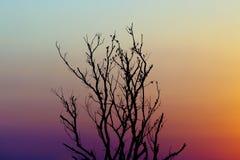 Kleurrijke de schemeringhemel van de silhouet Dode boom Stock Foto's