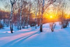 Kleurrijke de winterzonsondergang Royalty-vrije Stock Afbeeldingen
