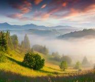 Kleurrijke de zomerochtend in Karpatische bergen Royalty-vrije Stock Afbeelding
