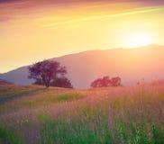 Kleurrijke de zomerzonsopgang in bergen Royalty-vrije Stock Afbeelding