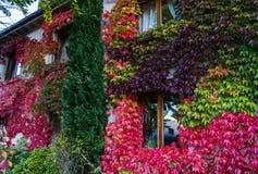 Kleurrijke decoratieve druif op de huismuur Royalty-vrije Stock Foto