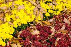 Kleurrijke diagonale bloemen de herfstachtergrond van geel en purper royalty-vrije stock afbeeldingen