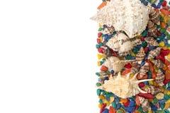 Kleurrijke die achtergrond van geïsoleerd shells wordt gemaakt Royalty-vrije Stock Fotografie