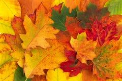 Kleurrijke die achtergrond van gevallen de herfstbladeren wordt gemaakt Royalty-vrije Stock Foto