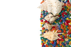 Kleurrijke die achtergrond van zeeschelpen wordt gemaakt Royalty-vrije Stock Foto