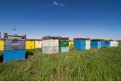 Kleurrijke die bijenkorven op een groen gebied worden gericht Stock Foto's