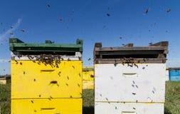 Kleurrijke die bijenkorven op een groen gebied worden gericht Stock Afbeelding