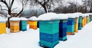 Kleurrijke die bijenkorven in sneeuw worden behandeld stock footage