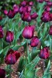 Kleurrijke die bloemen in het park in de lentetijd worden geplant royalty-vrije stock foto's