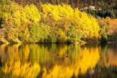 Kleurrijke die bomen in een meer in de Herfst worden weerspiegeld stock afbeelding