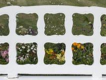 Kleurrijke die gebiedsbloemen door het gestalte geven van de rug van a worden gezien Stock Afbeeldingen