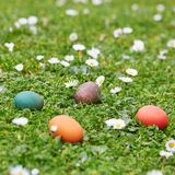 Kleurrijke die paaseieren in het groene gras worden verborgen Stock Foto's