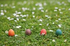 Kleurrijke die paaseieren in het groene gras worden verborgen Stock Afbeeldingen