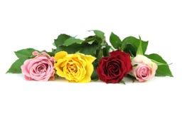 Kleurrijke die rozen op witte achtergrond worden geïsoleerd Stock Foto