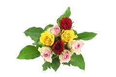 Kleurrijke die rozen op witte achtergrond worden geïsoleerd Stock Afbeelding