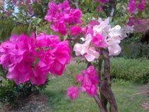 Kleurrijke document bloem stock foto's