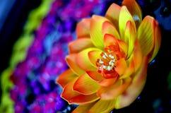 Kleurrijke Drijvende Lotus Flower Royalty-vrije Stock Afbeeldingen