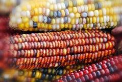 Kleurrijke droge Maïs stock afbeeldingen