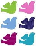 Kleurrijke duiven geplaatst die op wit worden geïsoleerdz Stock Foto