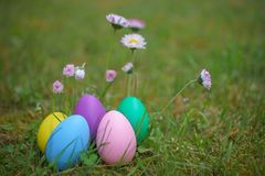 Kleurrijke eieren op gras met madeliefjebloemen Stock Fotografie