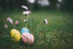 Kleurrijke eieren op gras met madeliefjebloemen Royalty-vrije Stock Fotografie