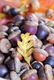 Kleurrijke Eikels met Één Klein Eiken Blad stock afbeelding