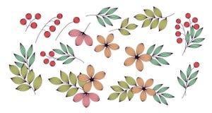 Kleurrijke elegante bladeren en bloemen met geplaatste aders bloemenelementen, vector stock illustratie