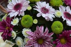 Kleurrijke en beauyful bloemen Stock Afbeelding