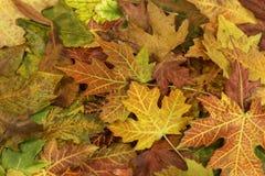 Kleurrijke en heldere achtergrond die van gevallen de herfstbladeren wordt gemaakt Stock Fotografie
