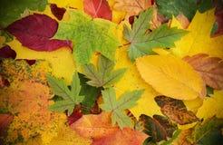 Kleurrijke en heldere achtergrond die van gevallen de herfstbladeren wordt gemaakt Royalty-vrije Stock Fotografie