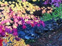 Kleurrijke esdoornbladeren De herfst royalty-vrije stock foto's